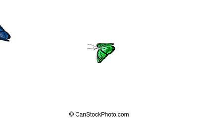 papillon, animation, 4