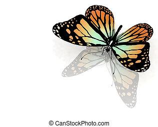 papillon, auf, a, weißes