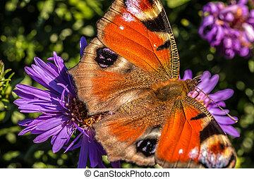 papillon, auf, violette blume, auf, der, grünes feld, von,...
