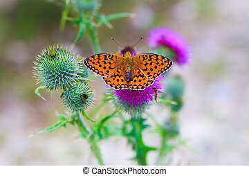 papillon, balanciert, blume