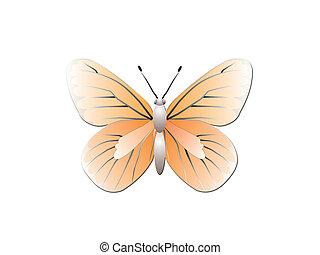 papillon, blanc, isolé, fond