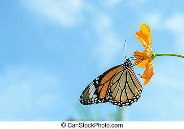 papillon, bleu, alimentation, ciel, contre, monarque,...