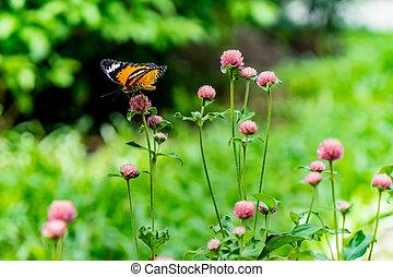 papillon, blumen