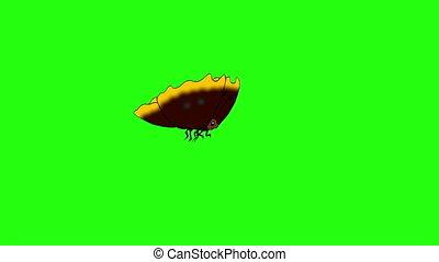 papillon, chroma, mouches, fait boucle, brown-striped