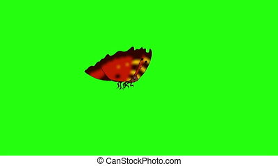 papillon, chroma, mouches, red-striped, fait boucle