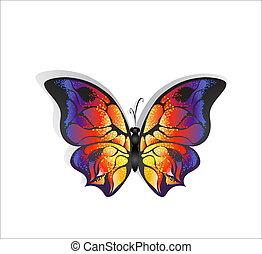 papillon, clair