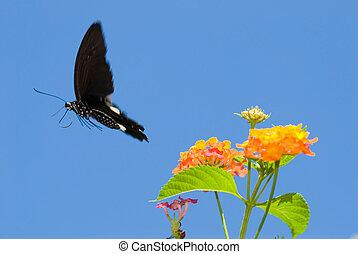 papillon, concept, voler, freedom., gratuite, swallowtail