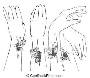 papillon, croquis, illustration, main, vecteur, mains, dessiné