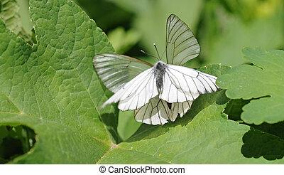 papillon, deux, fleurs