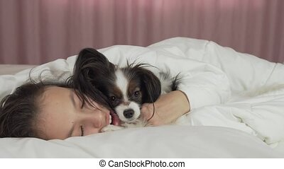 Papillon dog wakes teen girl in the bed stock footage video...