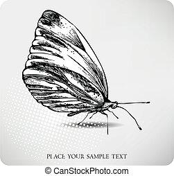 papillon, drawing., vektor, hand