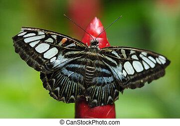 papillon, essaim, fleur, rouges