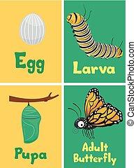 papillon, flash, illustration, cartes, monarque, cycle
