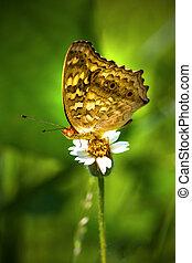 papillon, fleur blanche, herbe, séance