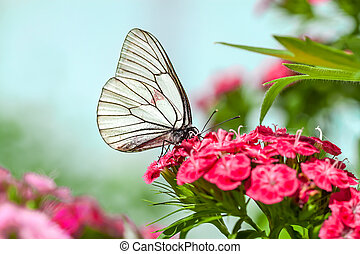 papillon, fleurs, assied