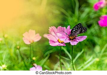 papillon, fleurs