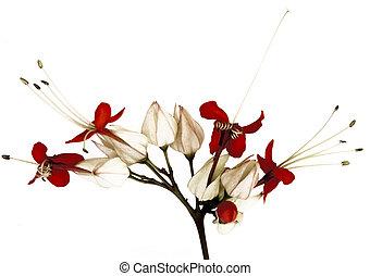 papillon, fleurs, rouge noir