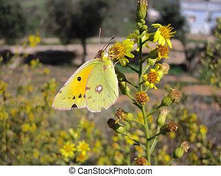 papillon, flower., pendre