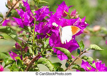 papillon, flowers., alimentation, rouges