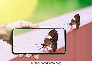 papillon, foto, smartphone, nehmen, hände