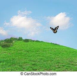 papillon, herbeux, colline