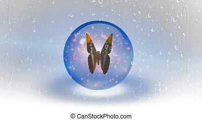 papillon, hinten, glas, nasse