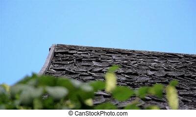 papillon, humulus, vieux, bûche, bois, bardeau, toit, cèdre, houblon, secousse, maison, cabine, grange