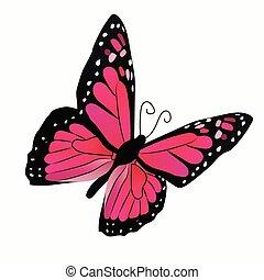 papillon, illustration, coloré
