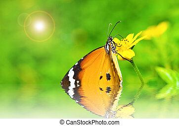 papillon, in, grün, natur