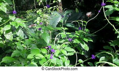 papillon, jardin