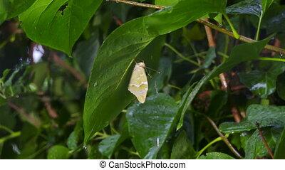 papillon, lent, feuille, pluie, mouvement, mouillé