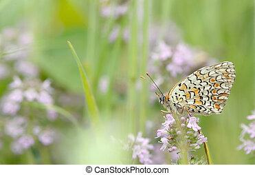 papillon, monarque, fleur