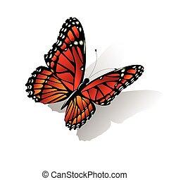 papillon monarque, vecteur