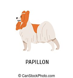 Papillon or Continental Toy Spaniel. Lovely small lap dog isolated on white background. Cute adorable little purebred domestic animal or pet. Colorful vector illustration in flat cartoon style.