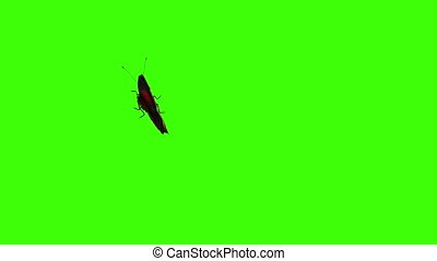 papillon, paon, voler, arrière-plan vert
