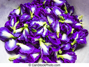 papillon, Pflanze, blume, dieser, equ, tropische, frisch,...