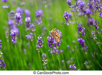 papillon, pflanze, verry, grüner hintergrund, nett