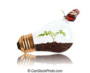 papillon, plant, lumière, intérieur, jeune, sol, croissant, ampoule, dehors