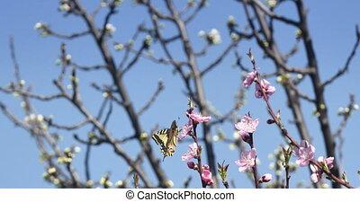 papillon, printemps, arbre, 4k