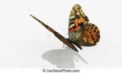 papillon, s'agiter, ailes