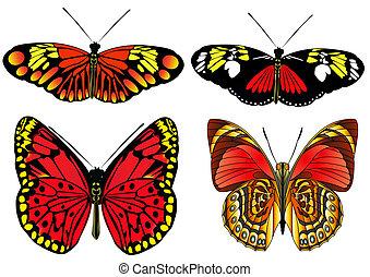 papillon, satz, isoliert, weißes