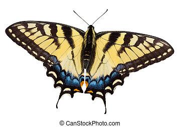 papillon, sentier, coupure