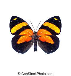 papillon, sur, a, fond blanc, dans, élevé, définition