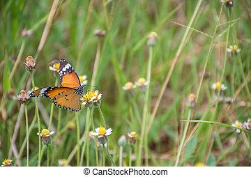 papillon, sur, herbe, fleur
