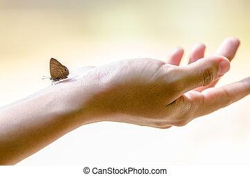 papillon, sur, main