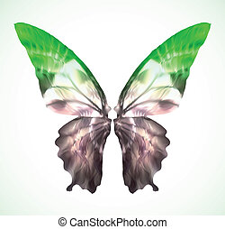 papillon, vibrant, vecteur, vert, isolated.