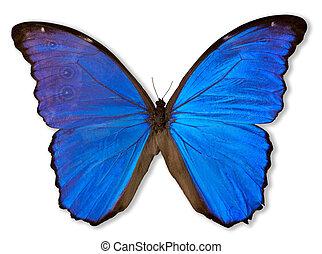 papillon, (with, path), bleu