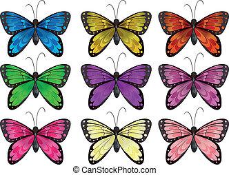 papillons, couleurs, différent