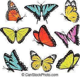 papillons, ensemble, coloré