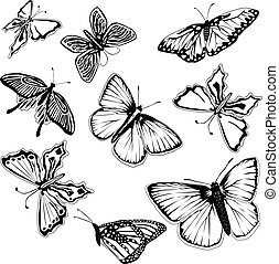 papillons, ensemble, noir, blanc